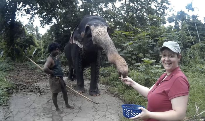 un paseo en elefante